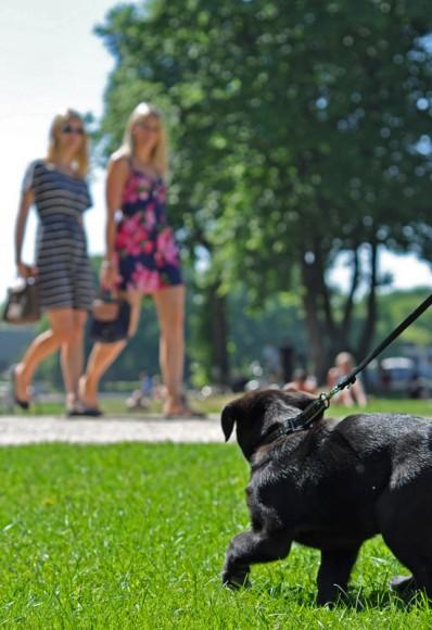 Hundewelpen als Frauenmagnet