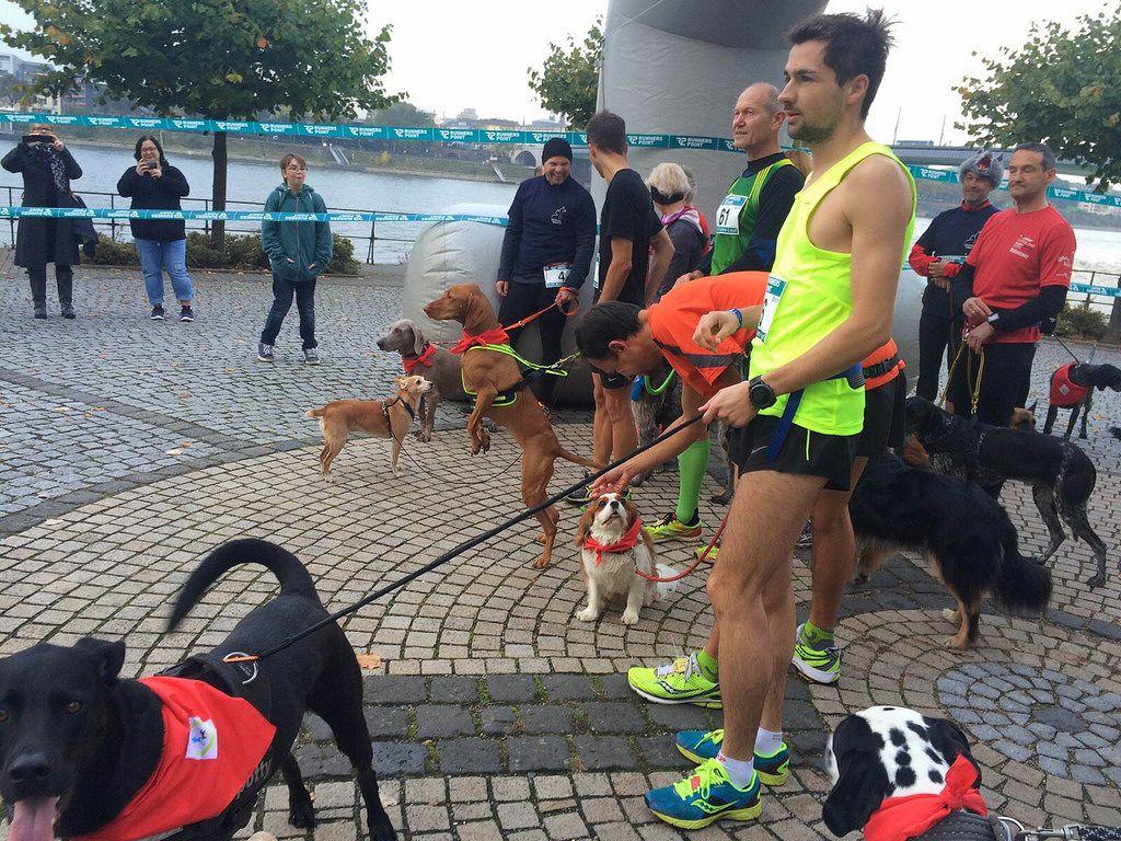 6 Pfoten Lauf in Bonn: Hund und Mensch joggen gemeinsam