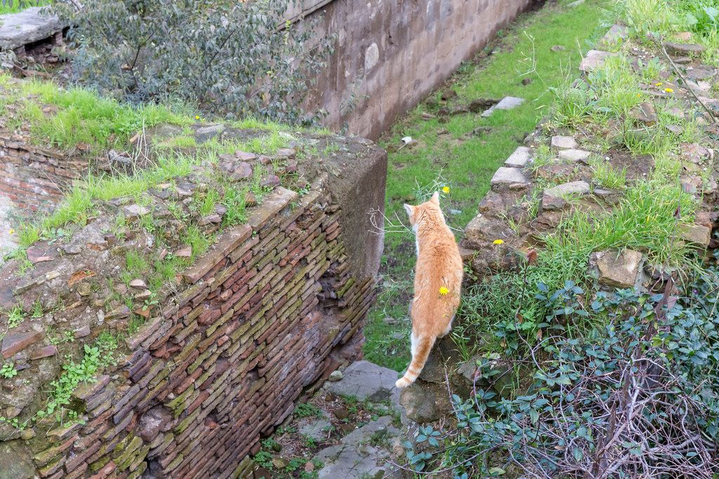 A cat strays through the Largo di Torre Argentina ruins in Rome