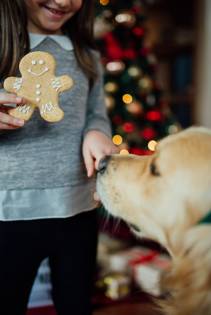 A girl with a Christmas cookie and a dog