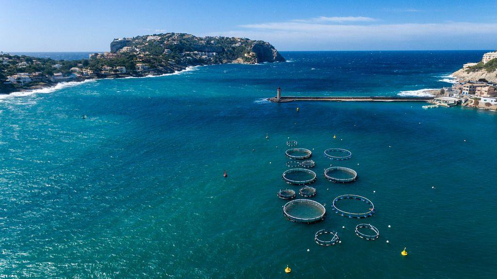 Aerial photo of fish farms in Puerto de Andraitx, Mallorca