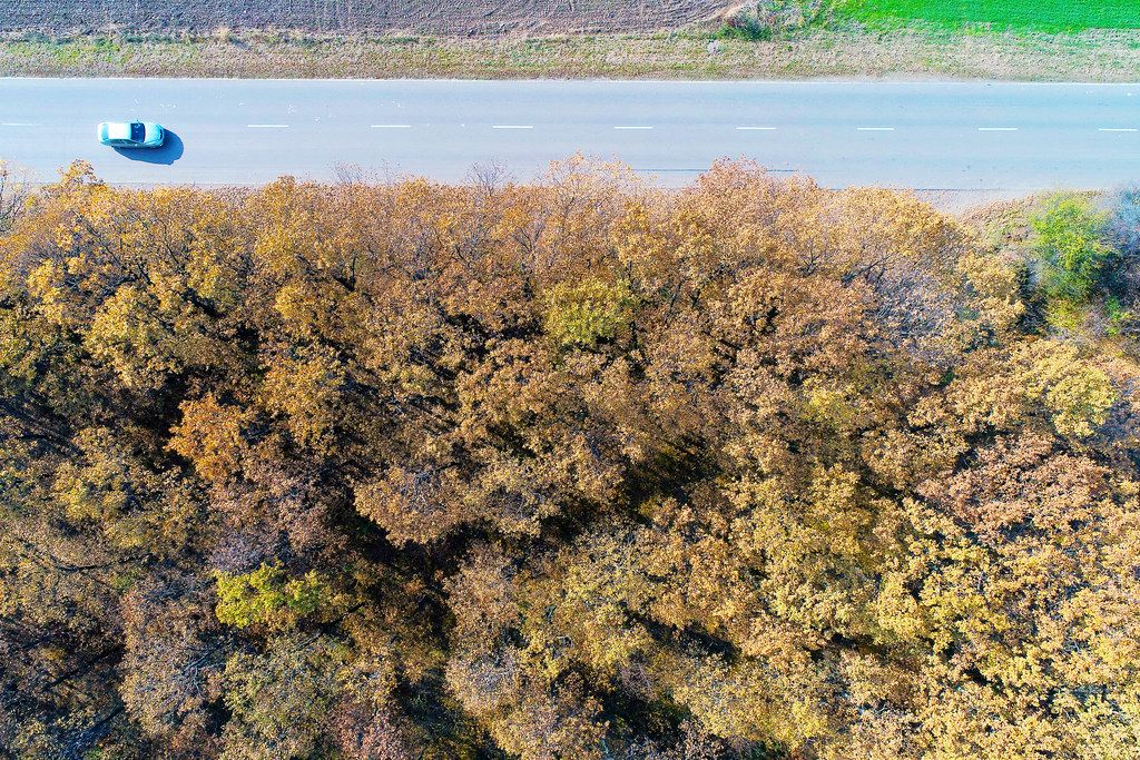 Aerial view of autumn forest and straight road