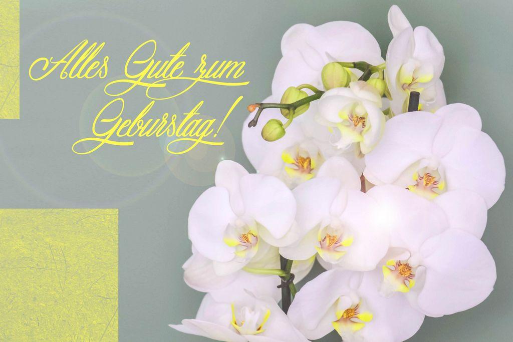 Orchideen F 252 R Geburtstag Creative Commons Bilder