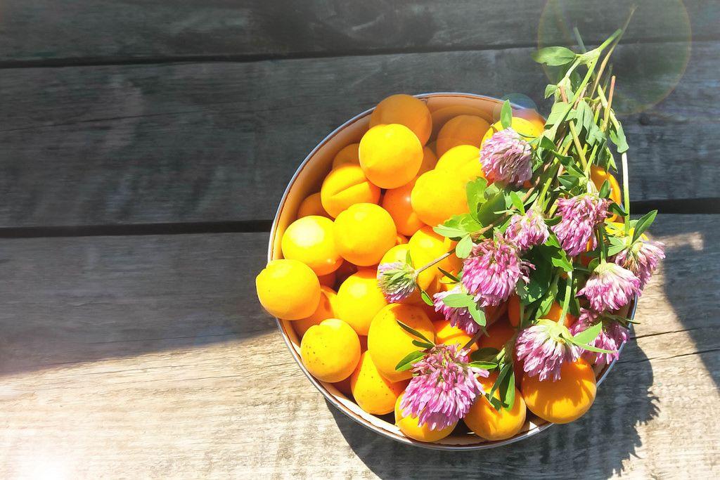 Apricots und Klee