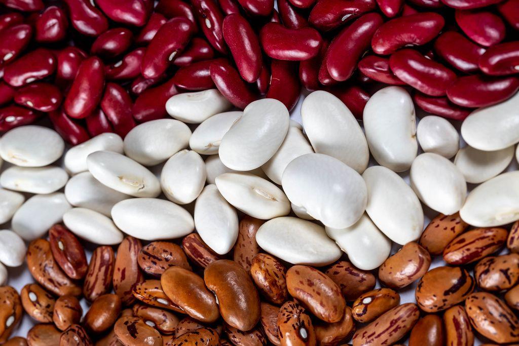 Assortment of beans of different varieties