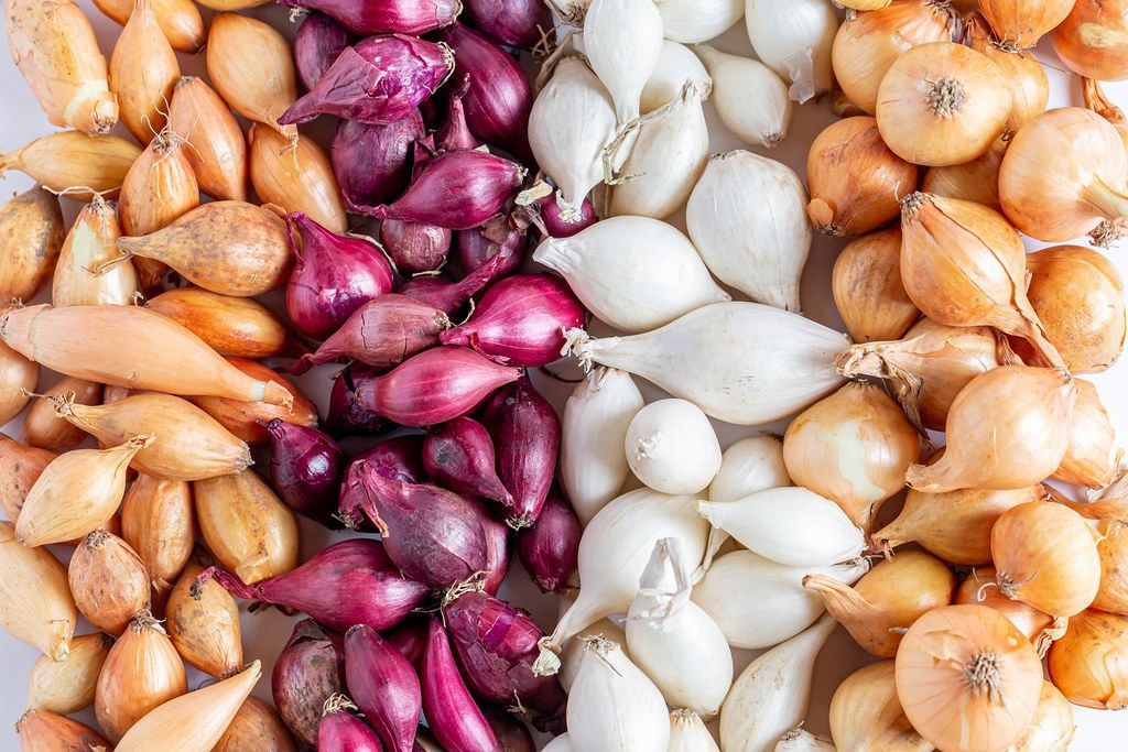 Background of different varieties of small onions
