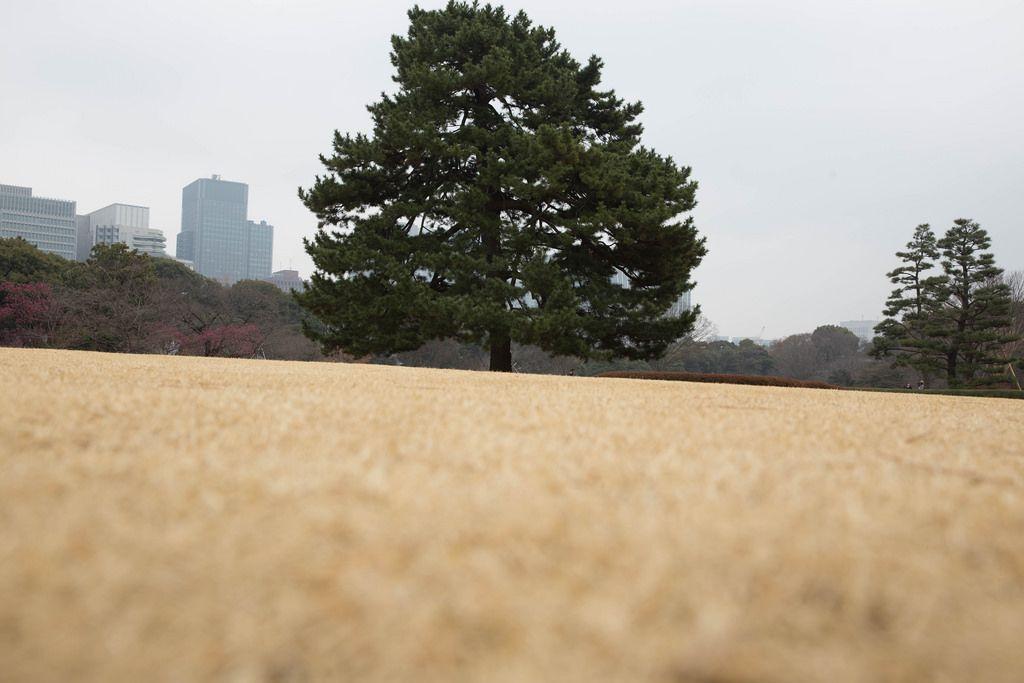 Baum in den Imperial Palace East Gardens Ninomaru in Chiyoda, Tokyo