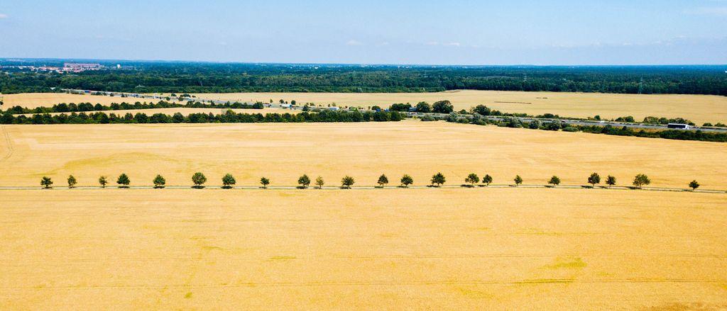 Bäume entlang einer Landstraße. Luftbild
