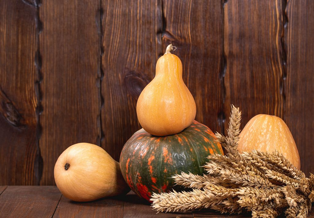 Beautiful pumpkins and wheat spikelets on old wooden background