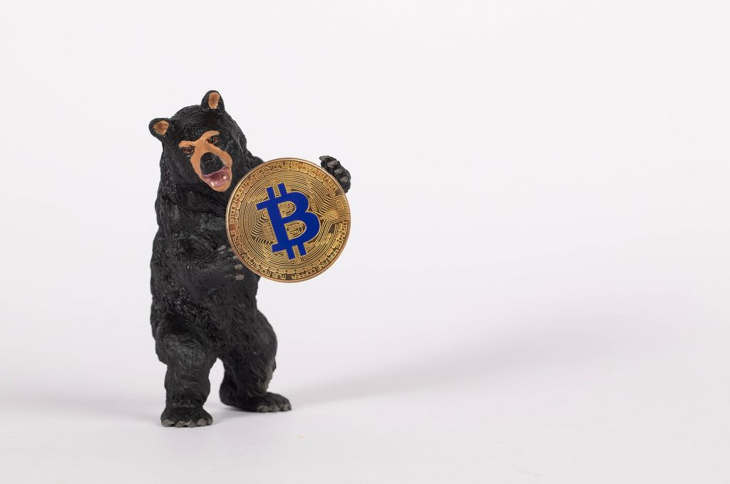 Black bear holding golden Bitcoin