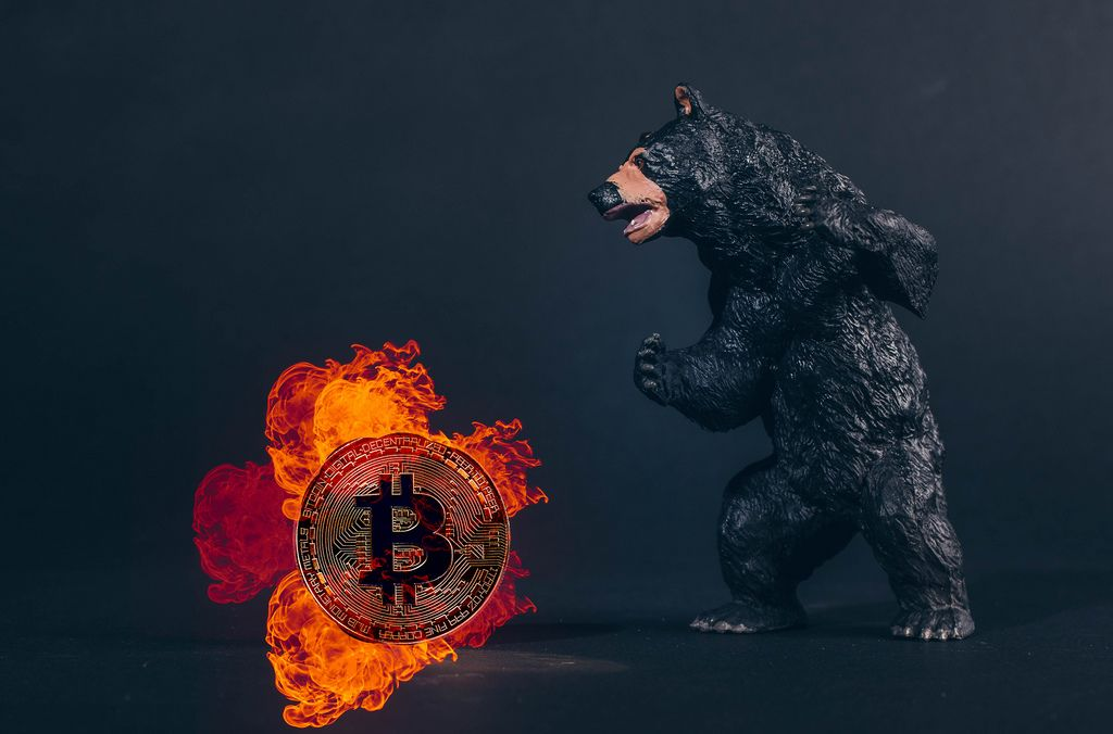 Black bear with Bitcoin in fire
