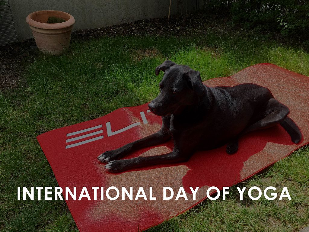 Black dog lies on a red yoga mat in the garden on the international day of yoga