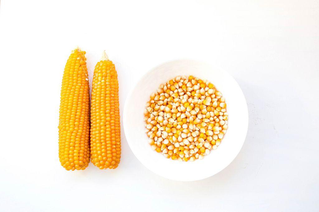 Blick von oben auf zwei geschälte Maiskolben und eine weiße Schüssel mit rohen Maiskörnern für Popcorn vor weißem Hintergrund