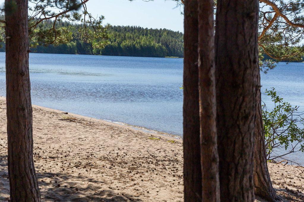 Blick zwischen Bäume hindurch auf den Sandstrand einer Insel im finnischen Nationalpark, mit blauem Wasser des Päijänne-See im Hintergrund