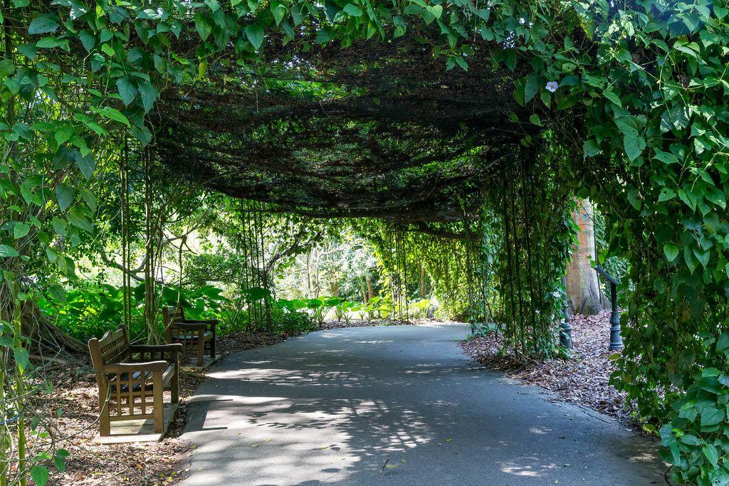Botanischer Garten in Singapur