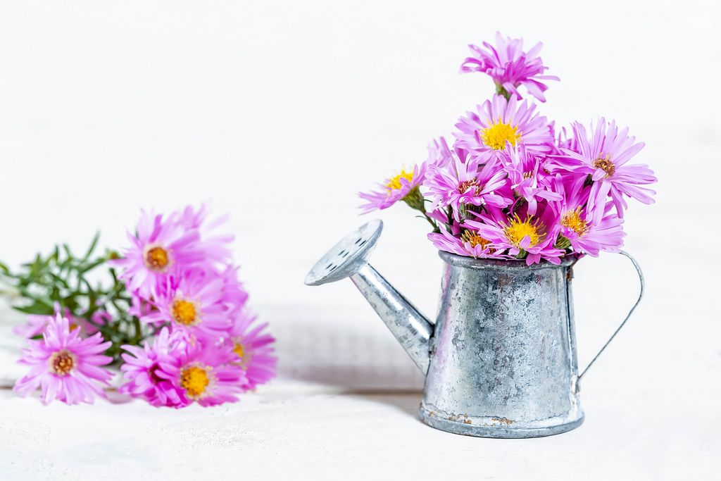 Bouquet of lilac flowers in a sprinkler on a white background