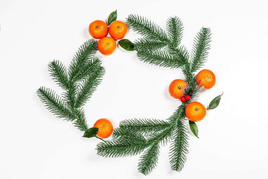 Branches of a Christmas tree with ripe tangerines in the shape of a circle on a white background. The view from the top (Flip 2019)