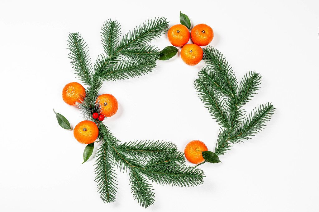 Branches of a Christmas tree with ripe tangerines in the shape of a circle on a white background. The view from the top