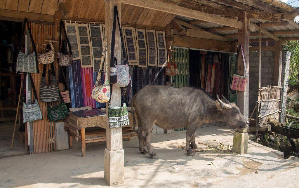 Buffalo in the Village Sapa .CR2