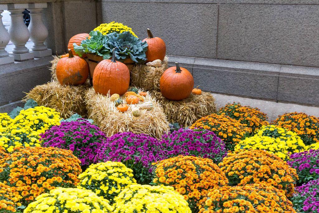 Bunte Halloween Deko Mit Kurbissen Blumen Und Kleinen Heuballen In Chicago Creative Commons Bilder
