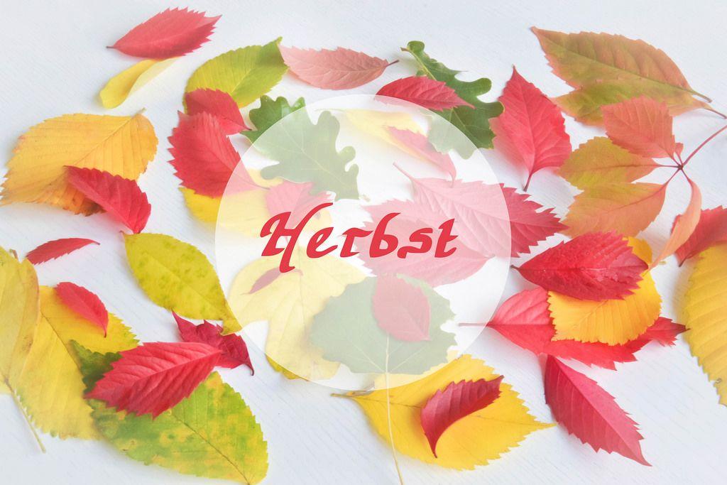 Bunte Herbst-Blätter