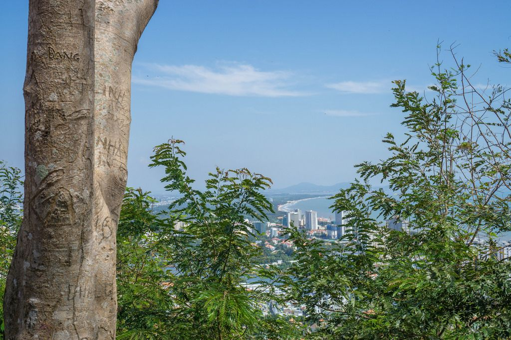 Carvings in a Tree with a City View of Vung Tau in the Background