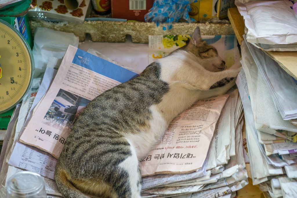 Cat Sleeping on Korean Newspaper at a Market in Saigon