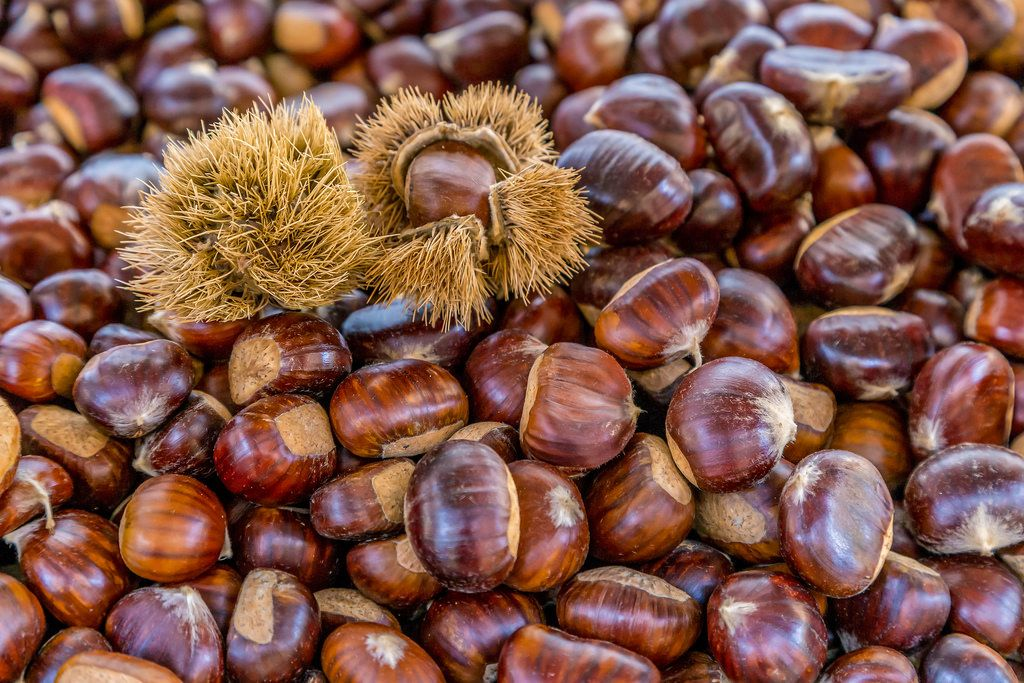 Chestnuts with cupules on marketplace