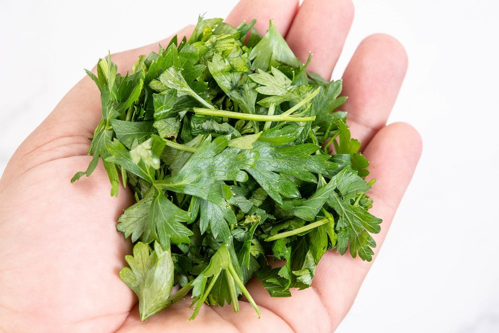 Chopped Parsley in the hand above white background