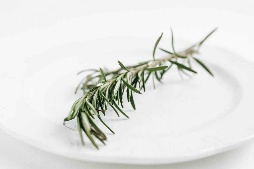 Close up of fresh rosemary on white background