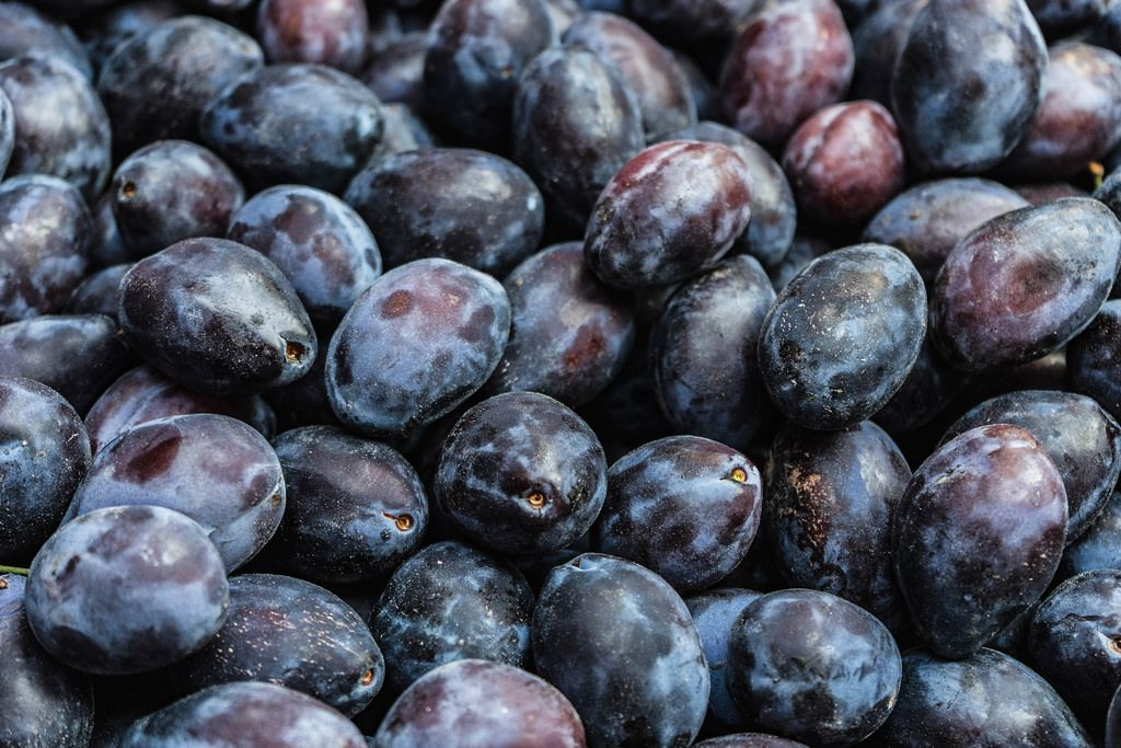 Close Up on a Pile of Ripe Plums
