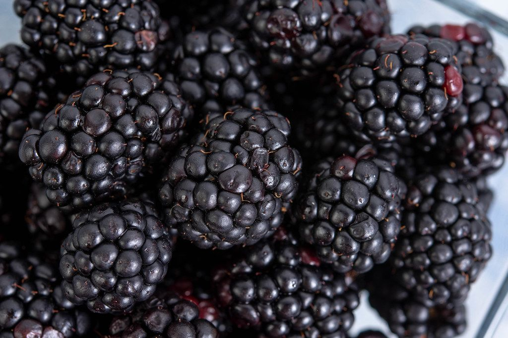 Closeup of fresh Blackberries in the box