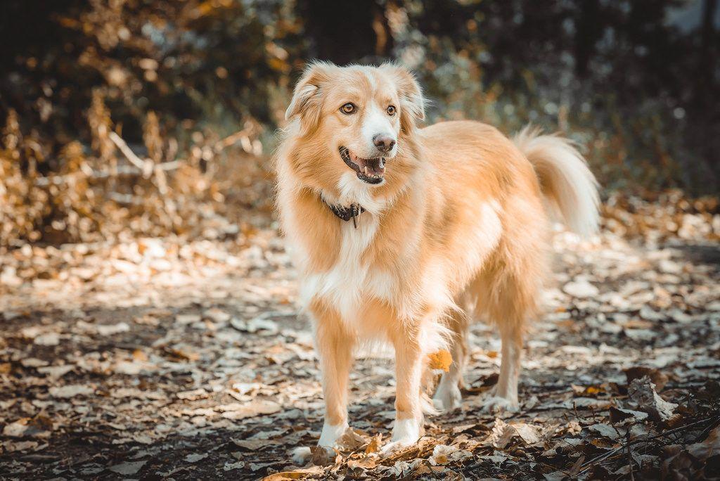 Cute orange dog