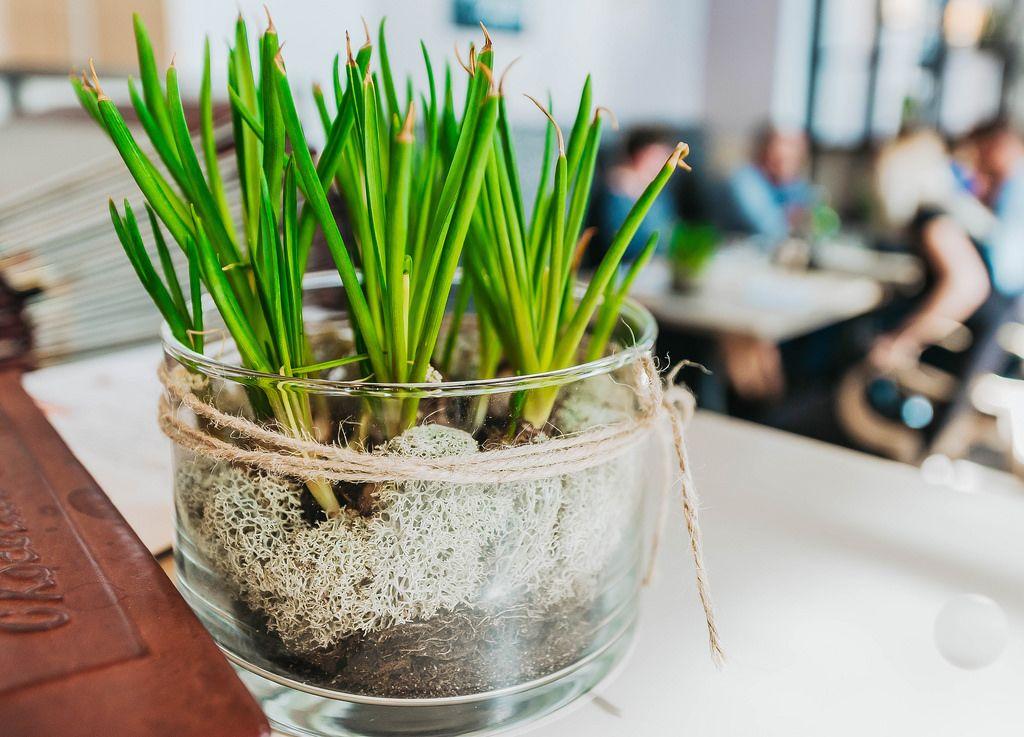 Decor Plant In Restaurant - Creative Commons Bilder