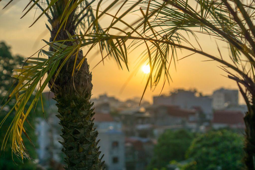 Der Sonnenuntergang in Hanoi mit Palmen im Vordergrund