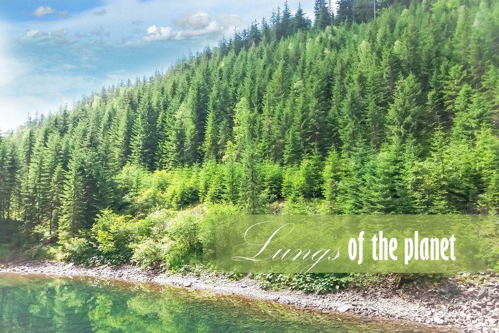 Der Wald: Die Lunge der Welt
