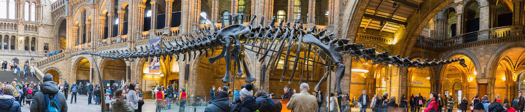 Dino in Natural History Museum London