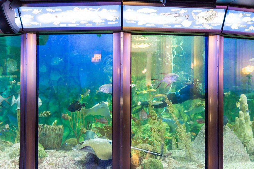 Diver cleaning glass inside the aquarium - Shedd Aquarium, Chicago