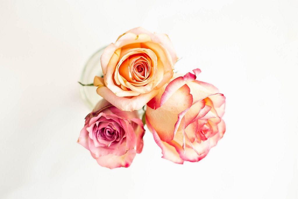 Draufsicht von kleinen bunten Rosen auf weißem Hintergrund