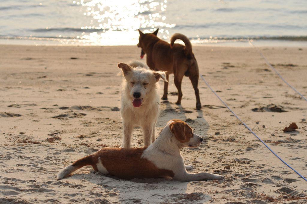 Drei Hunde auf einem Strand
