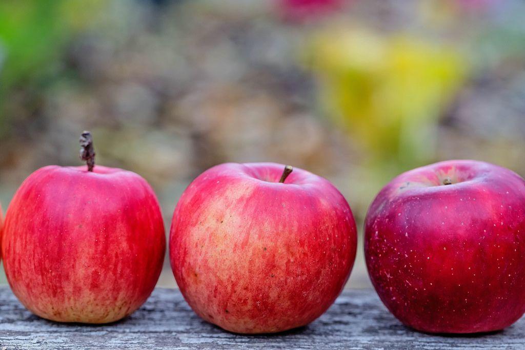 Drei rote Bio-Äpfel in der Reihe auf einem Tisch