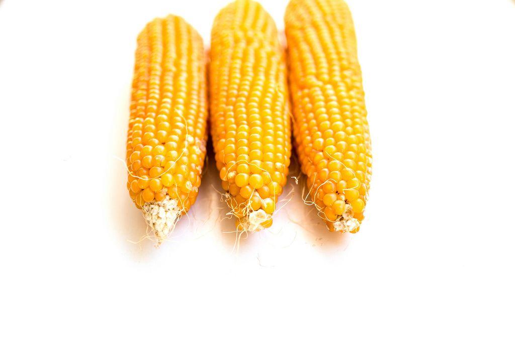 Drei ungekochte, geschälte Maiskolben liegen nebeneinander auf weißem Hintergrund