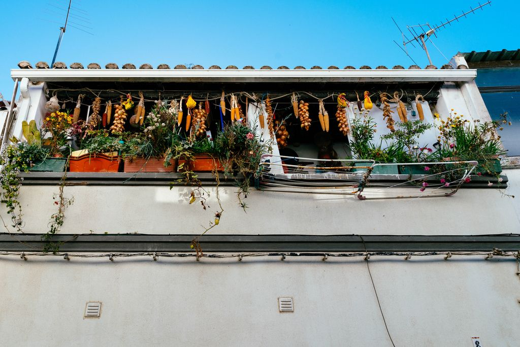 Dried vegetables on the Portugese balcony with flowers (Flip 2019) (Flip 2019) Flip 2019