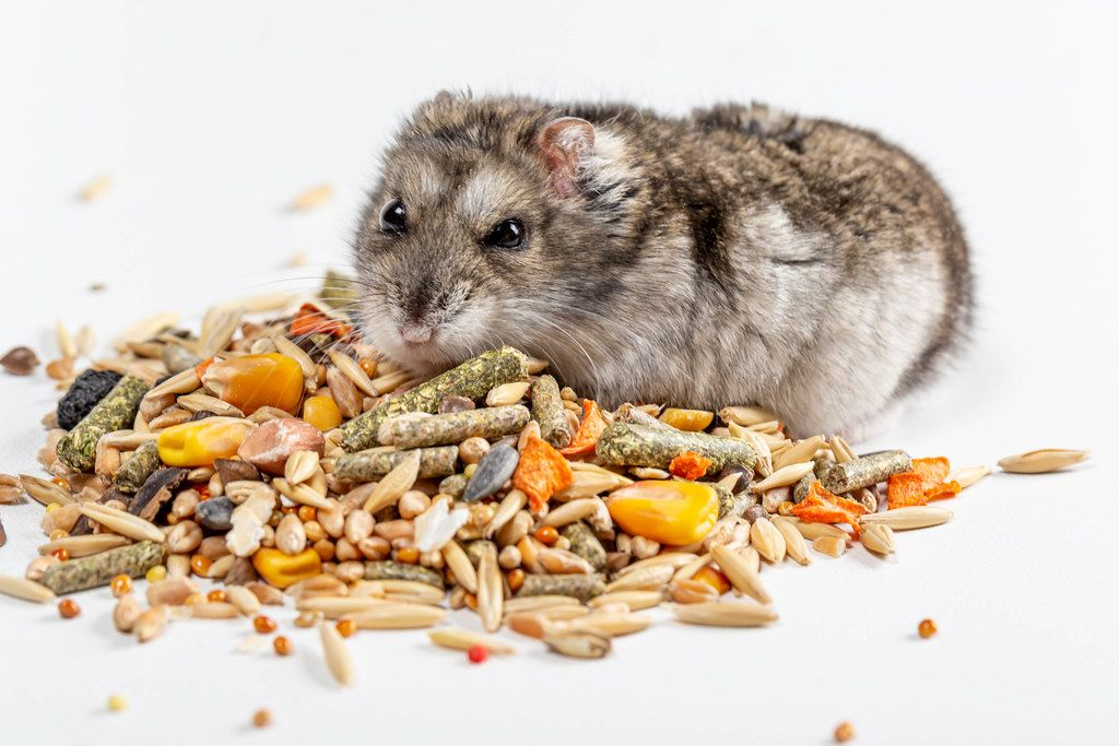 Dwarf hamster on the background of food with different seeds