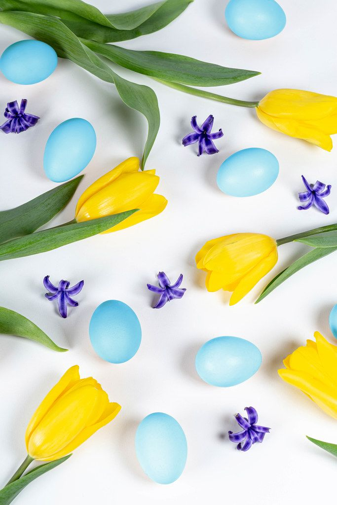 Easter background with blue eggs, yellow tulips and hyacinth flowers (Flip 2020)