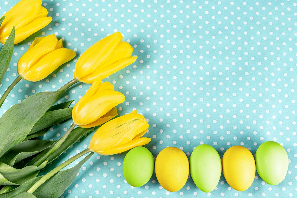 Easter eggs with yellow tulips on blue background
