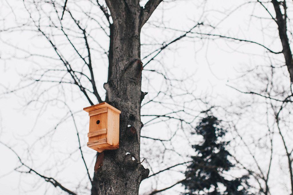 Ein aus Holz gefertigter Vogelhaus am Baum. Wintersaison