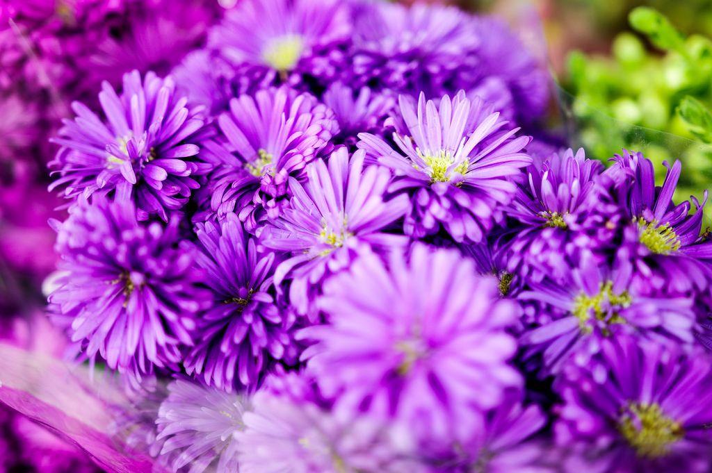 Ein Blumenstrauß aus lila farbigen Blumen