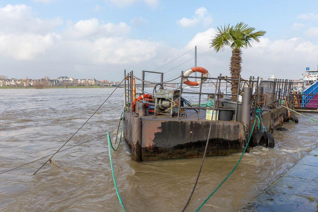Ein Flussfloß auf dem Rhein mit einer echten Palme