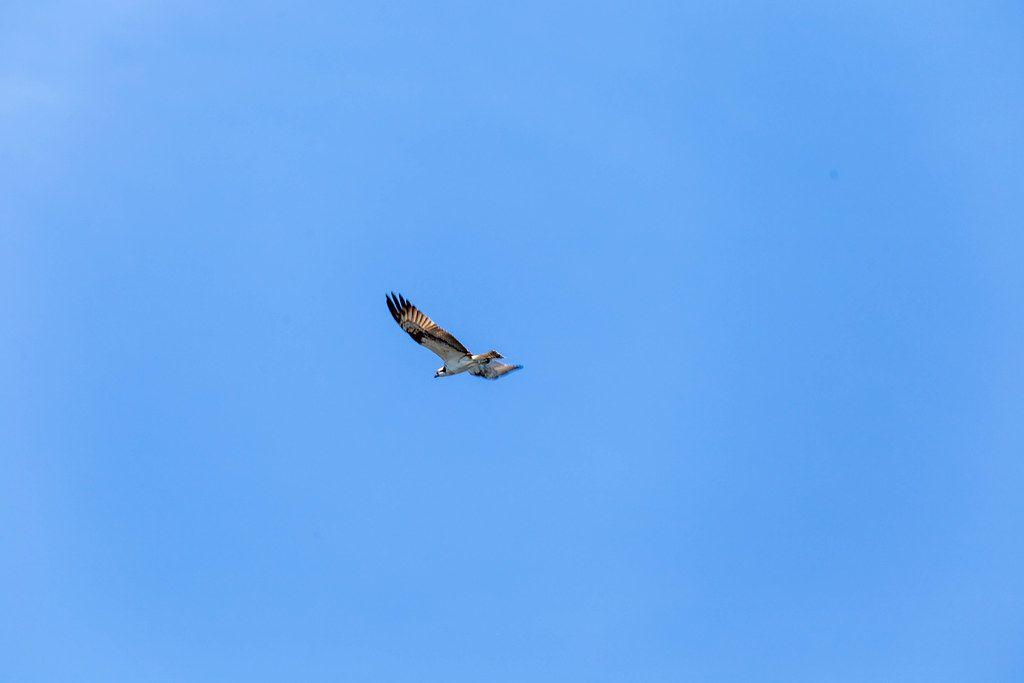 Ein großer Vogel fliegt davon, mit blauem Himmel im Hintergrund